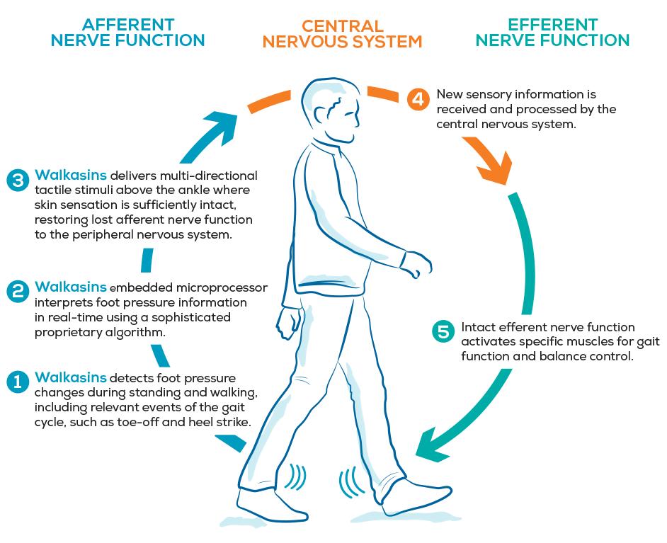 Walkasins Wearable Sensory Prosthetic   Mechanism of Action